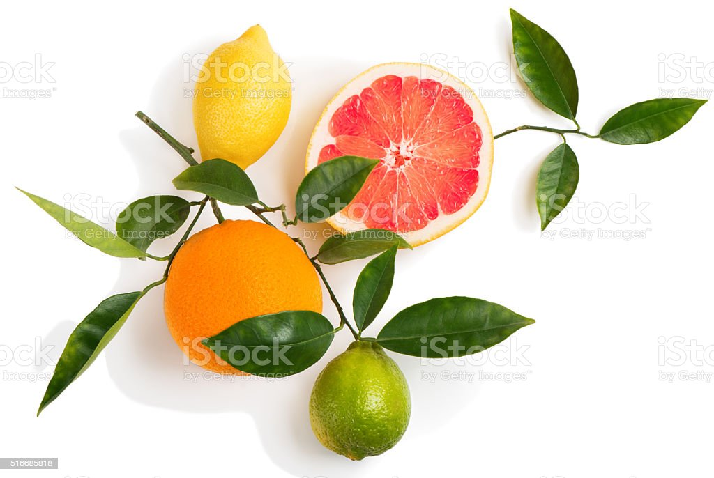 Twig with citrus fruits stock photo
