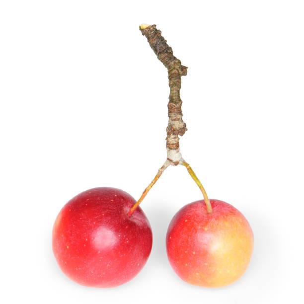 Twig with crabapples picture id698877426?b=1&k=6&m=698877426&s=612x612&w=0&h=pgob fpufntlqs0nbnwfj1h4rebvy15ytam2pngzs q=