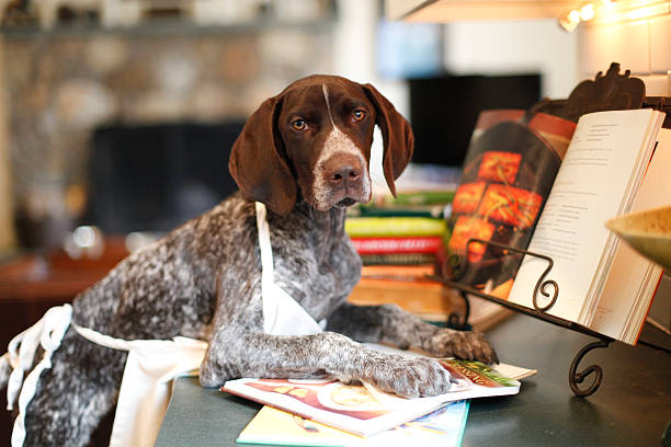 Twiglet deciding what to cook Twilit looks at the cook books dog recipe stock pictures, royalty-free photos & images