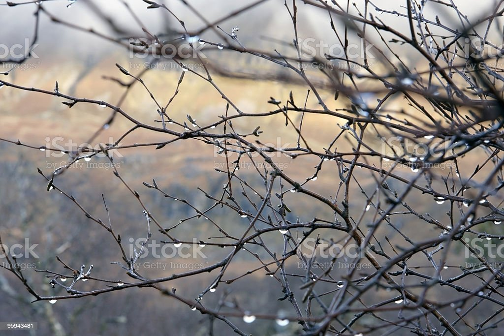 twigs and drops in blurry back royalty-free stock photo
