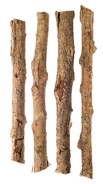 Twigs and Sticks Isolated on White stock photo