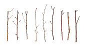 istock Twigs and Sticks Isolated on White 500627468