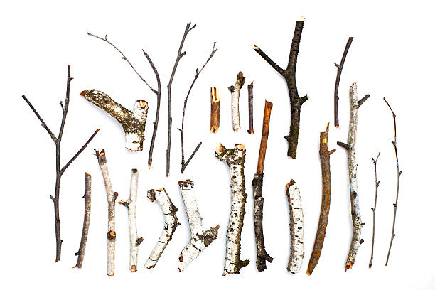 twigs and sticks on white background - twijg stockfoto's en -beelden