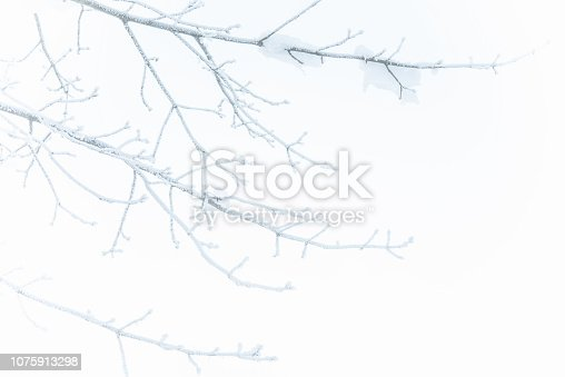 Twigs Covered with Snow