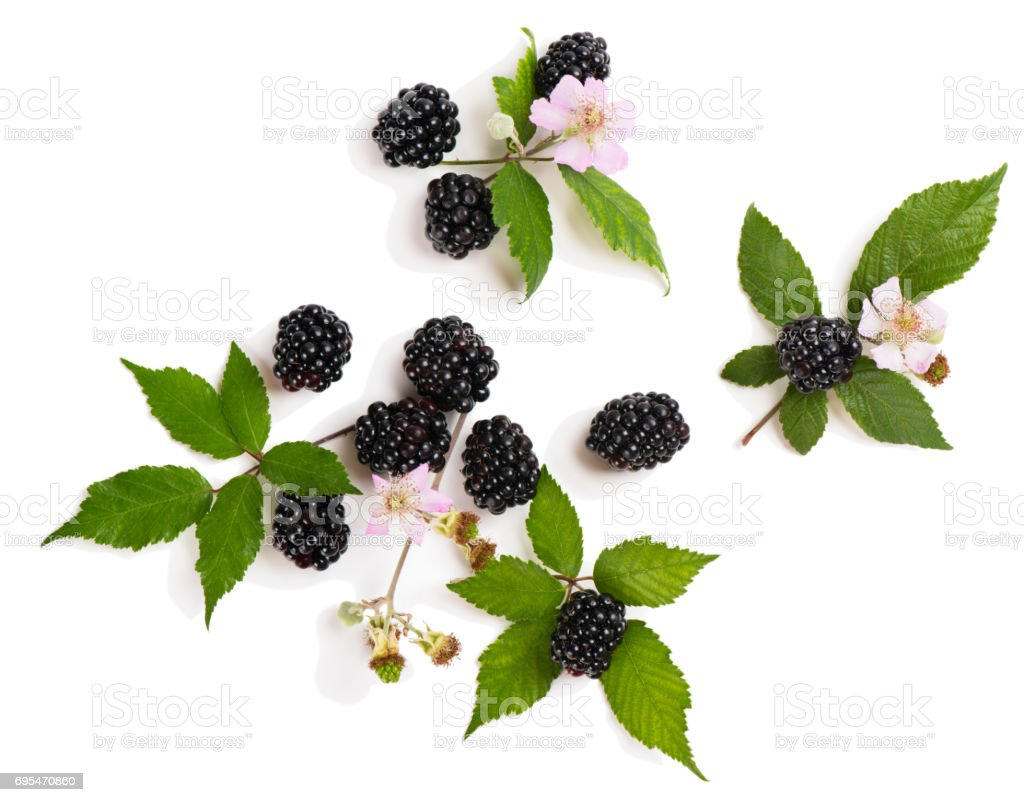 Twigs of blackberry, above view. stock photo