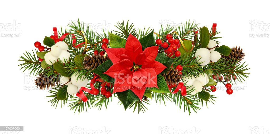 Twigs Of Christmas Tree Poinsettia Flower Berries And