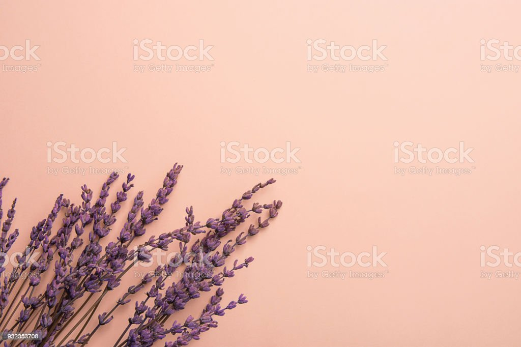 Twigs of Lavender Flowers Arranged in Lower Border on Solid Pink Background. Easter Mother's Day Wedding Wellness Cosmetics Concept. Minimalist Style. Website Banner Template Copy Space stock photo