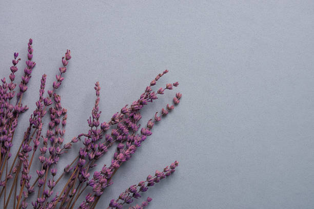 Twigs of lavender flowers on grey stone background in vintage style picture id902866874?b=1&k=6&m=902866874&s=612x612&w=0&h=b3khrllznl7hje3n2qjnw4pkpduommuf1wjw66ewyds=