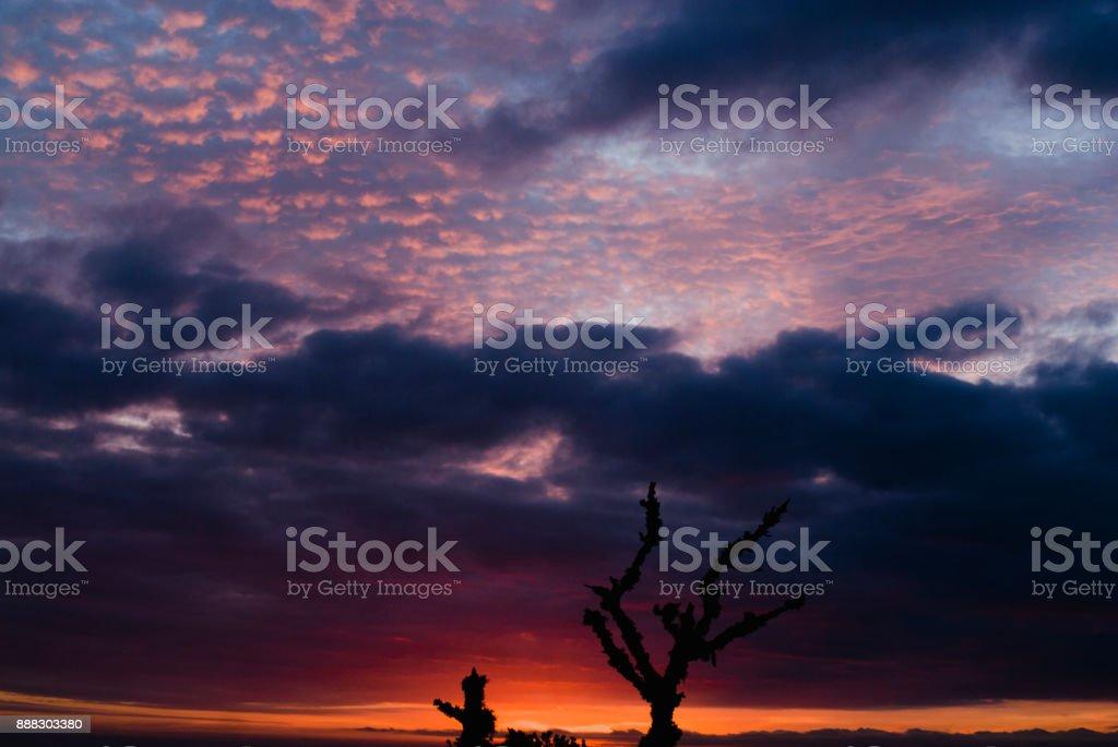 Silhuetas de galhos ao nascer do sol no Brasil - foto de acervo