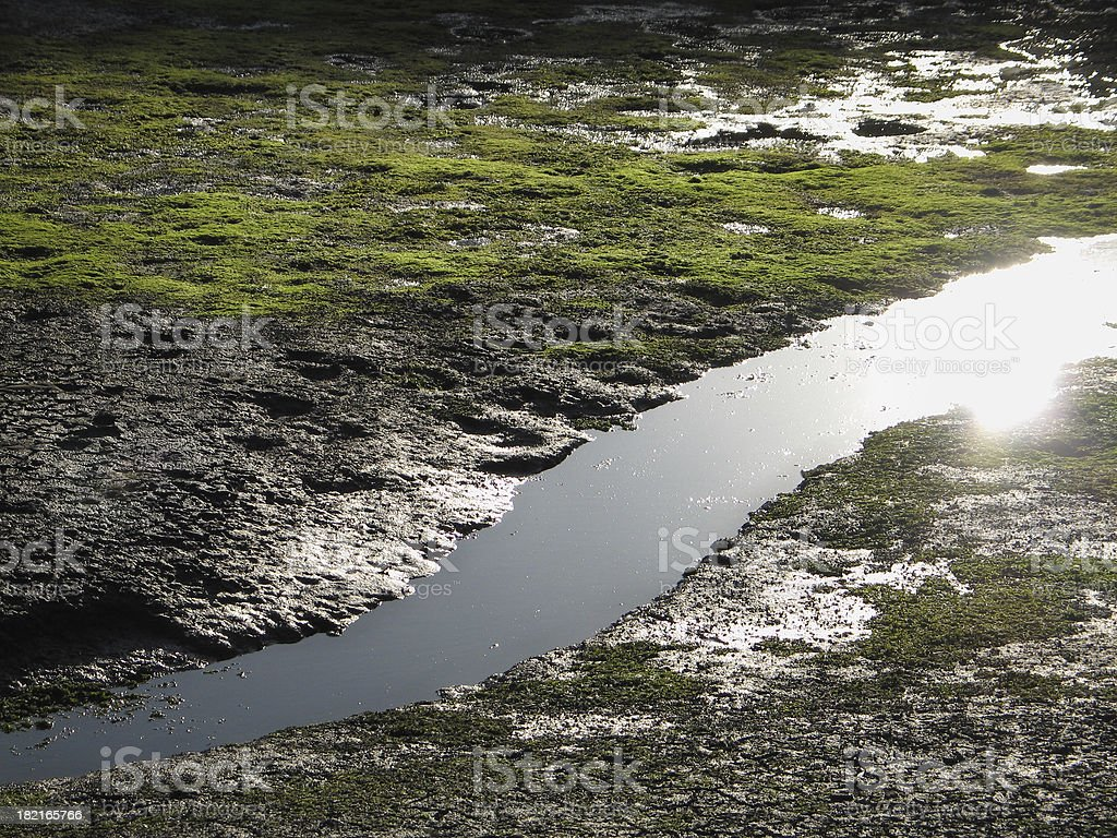 Twilight and low-tide at the marsh royalty-free stock photo