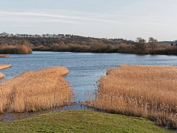 twilight at attenborough - nature reserve stock photos and pictures