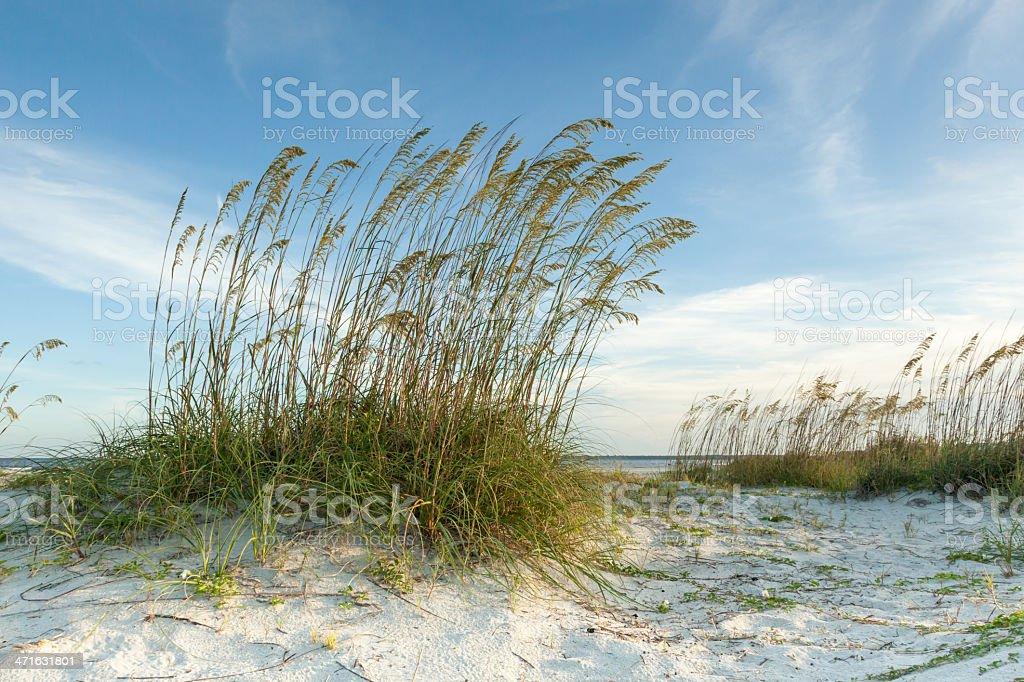 Twilight Dunes View royalty-free stock photo