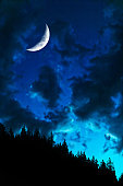 forest in silhouette with crescent moon at twilight, vertical frame (XL)
