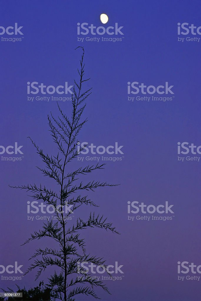 twilight moonrise royalty-free stock photo