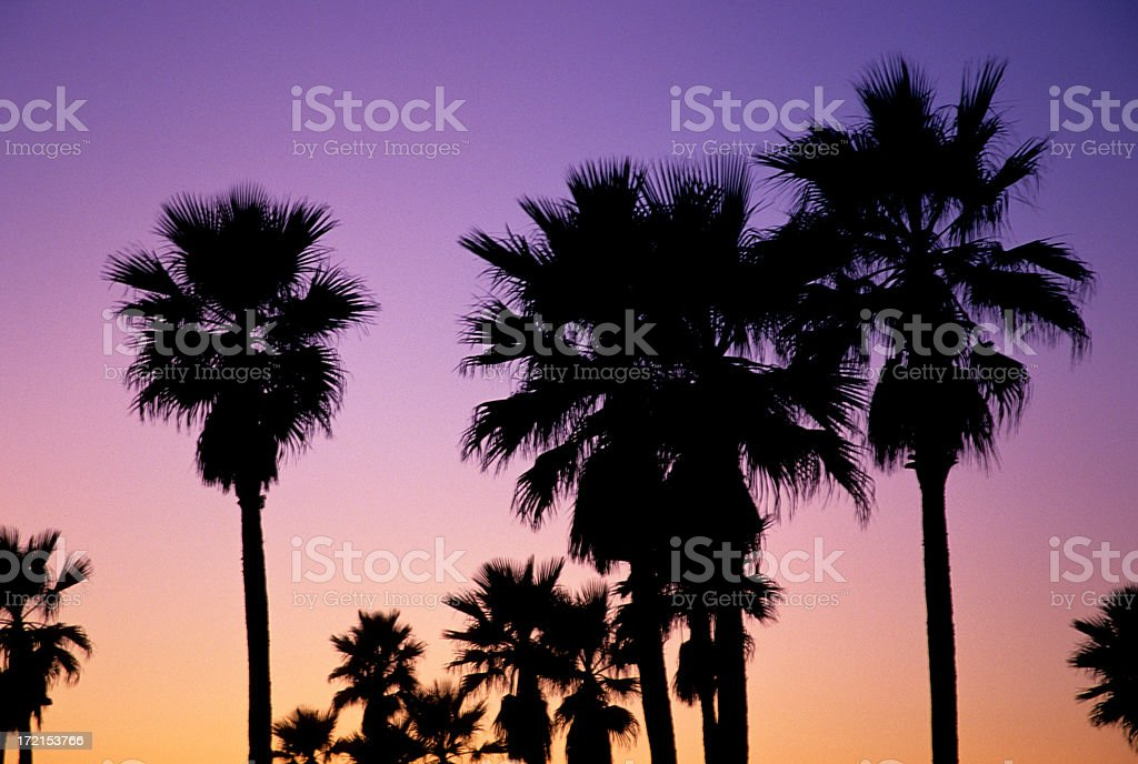 Twilight Palms royalty-free stock photo