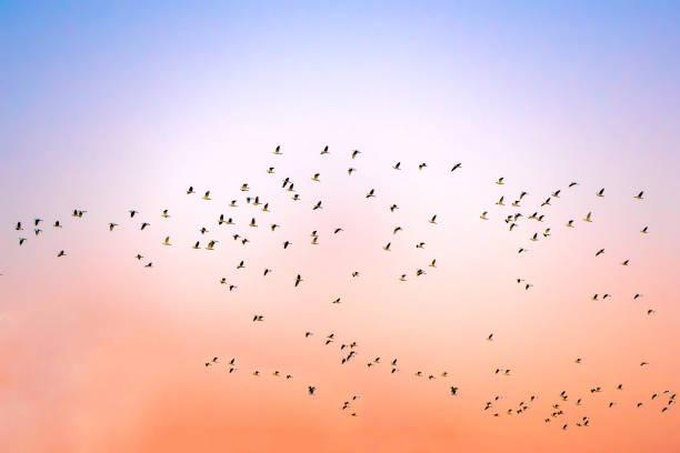 Dämmerungshimmel Hintergrund und Vögel fliegen zum Nest als das Wiedersehen zurück nach Hause – Foto
