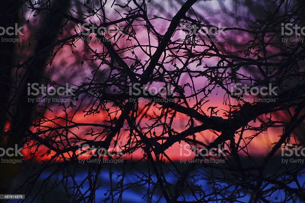 Twilight through branches : Colorful sunset back lit tree stock photo