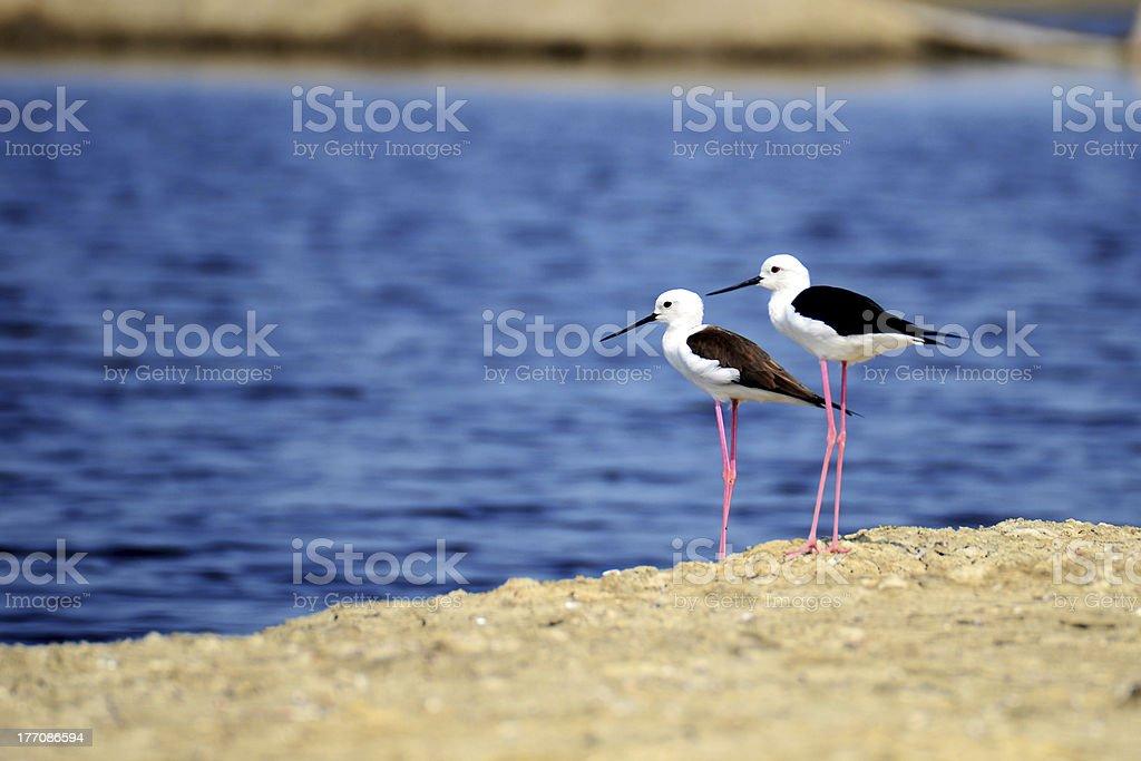 Twin Birds royalty-free stock photo
