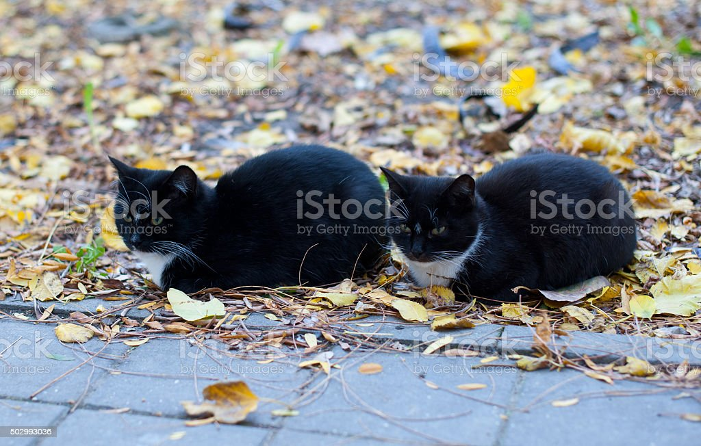 Twin black cats sitting in the park stock photo