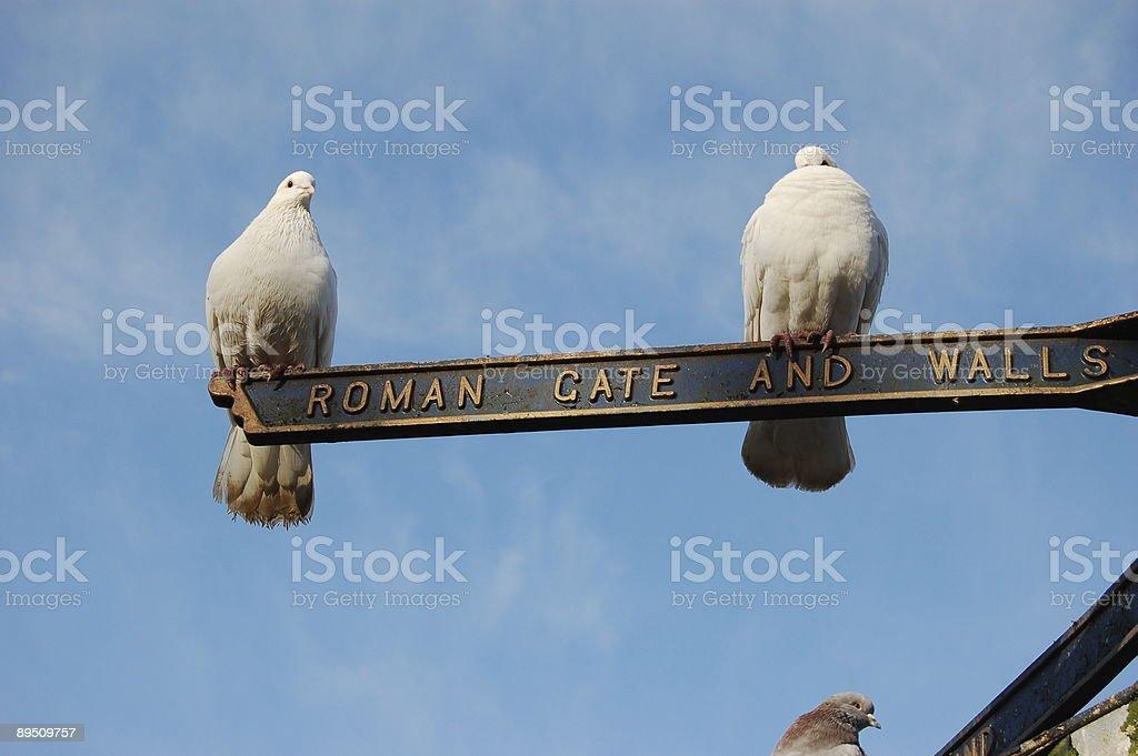 Twin Doves royalty-free stock photo