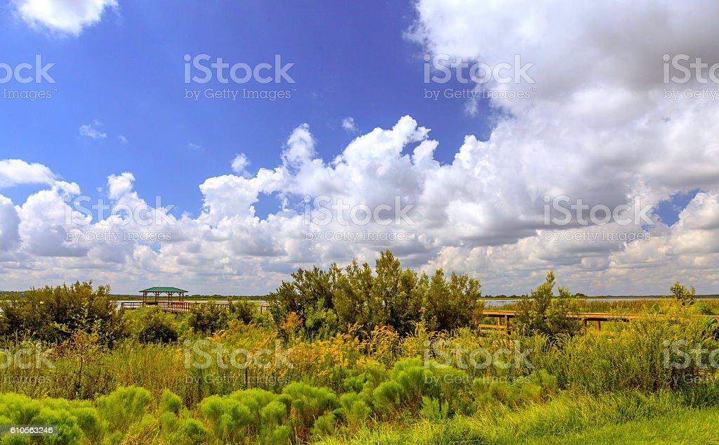 Twin Oaks Conservation Area near Kissimmee, FL stock photo