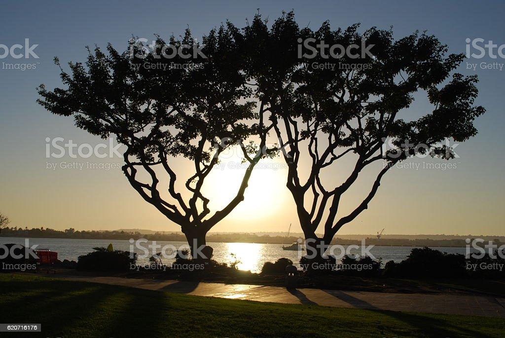 Twin trees on ocean at sunset stock photo