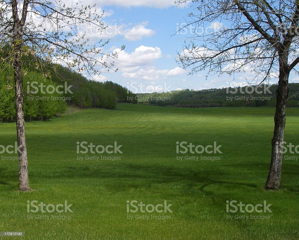 Twin Trees stock photo