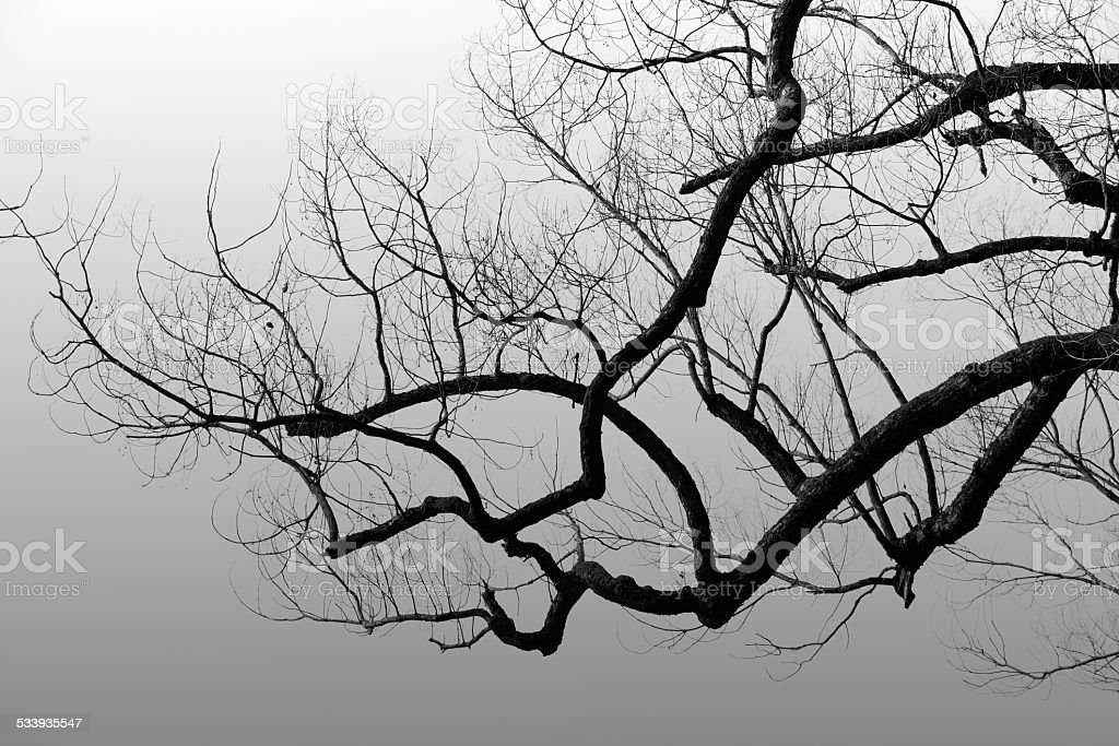 Twisted and leafless trees at morning stock photo