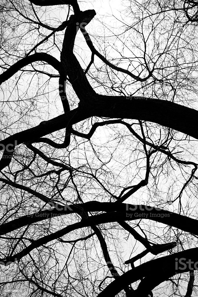 twisted and leafless trees stock photo