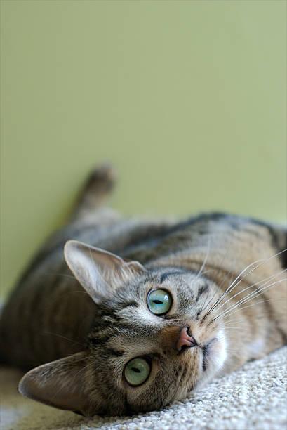 Twisted cat picture id172744663?b=1&k=6&m=172744663&s=612x612&w=0&h=6qfftevht98gg8p7d8u mmloktdbgk8mfwvtku3n g4=