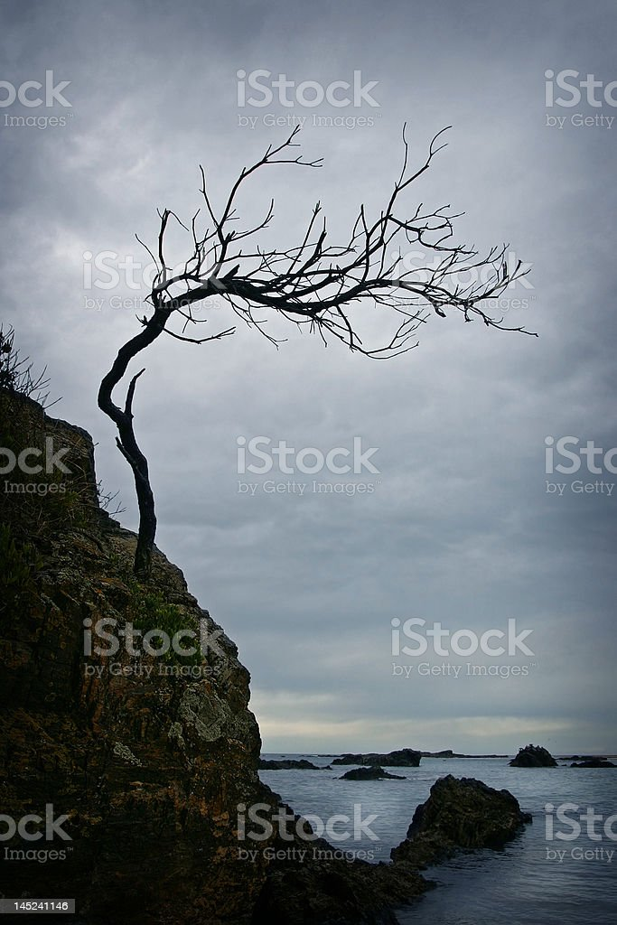 Twisted Dawn royalty-free stock photo