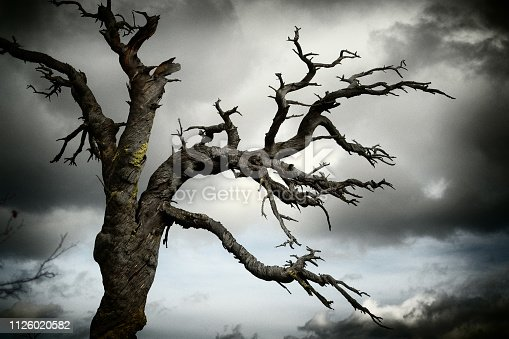 A gnarled twisted dead tree against a dramatic cloudy sky