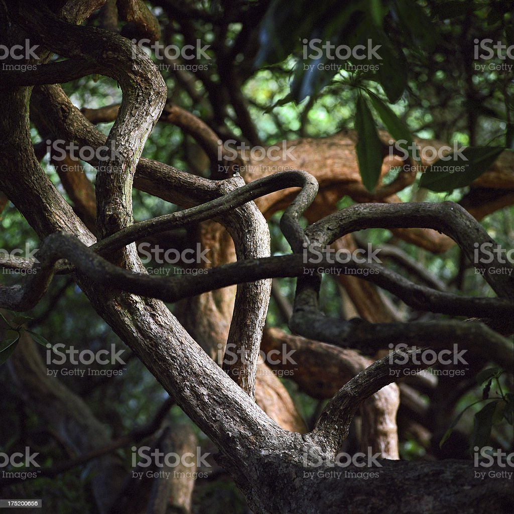 Twisted forest branches royalty-free stock photo