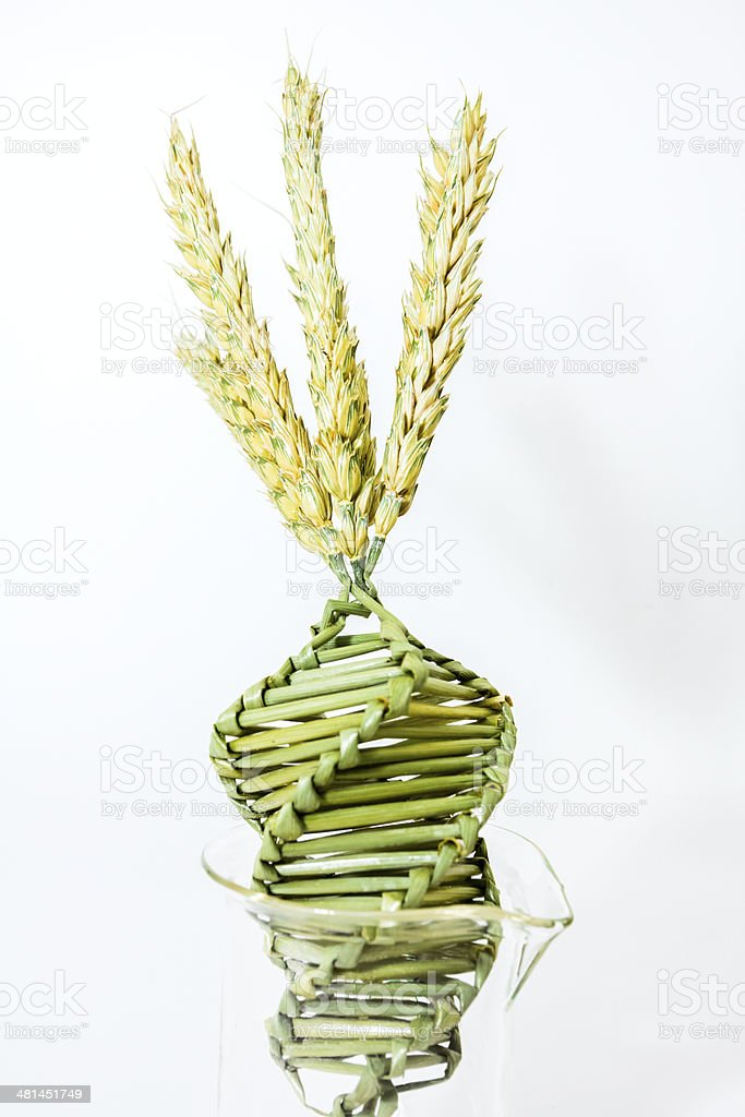 Twisted grain in DNA array royalty-free stock photo