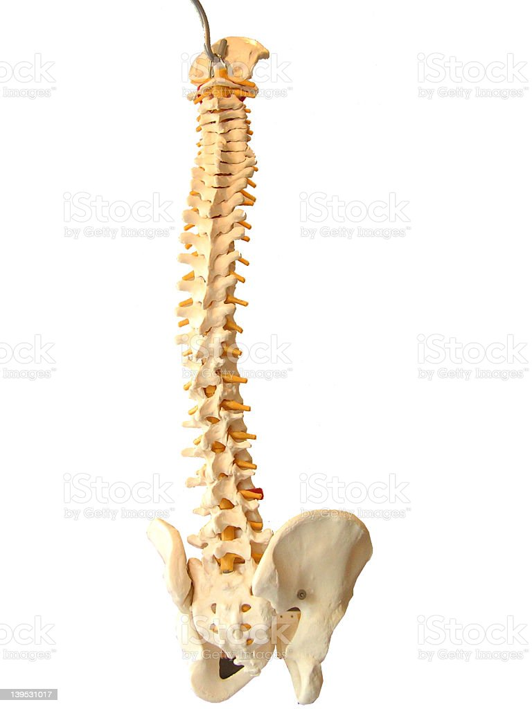 twisted human spine stock photo