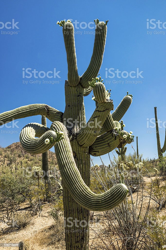 Twisted Nature royalty-free stock photo