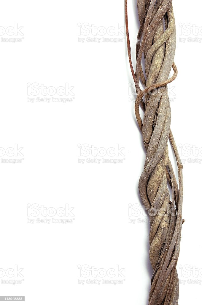 twisted roots royalty-free stock photo