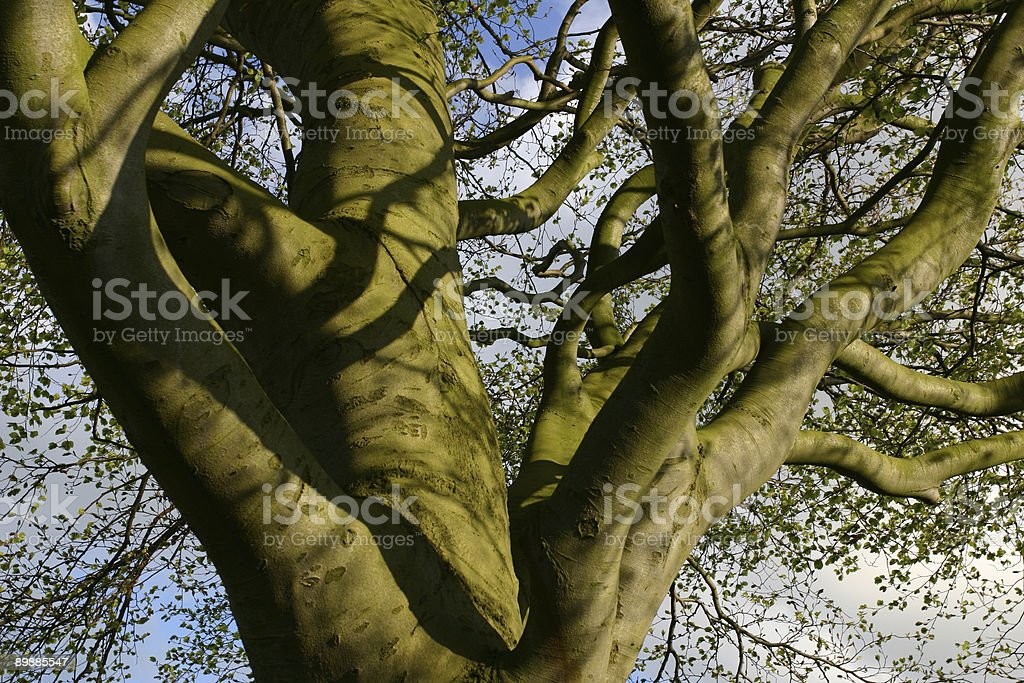 twisted tree trunk and branches royalty free stockfoto