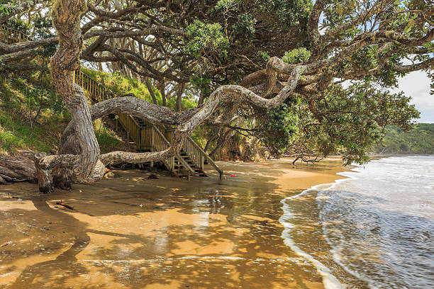 Twisted trees on a low tide beach stock photo