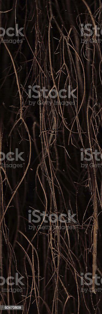 Twisted Twigs royalty-free stock photo