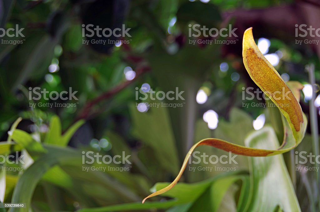 Twisting Leaf royalty-free stock photo