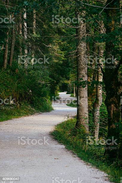 Photo of Twisting track leading through dense forest