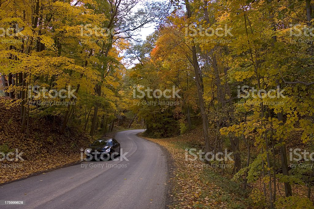 twisty forest road royalty-free stock photo