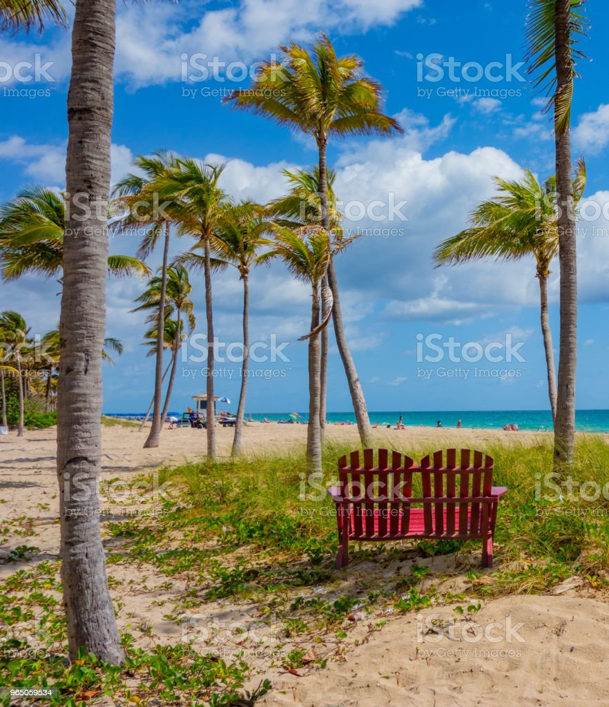 Two Adirondack chairs sit in sand in front of palm trees in Fort Lauderdale, Florida royalty-free stock photo