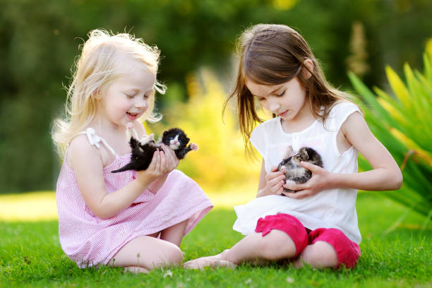Two adorable little sisters playing with small newborn kittens picture id843889998?b=1&k=6&m=843889998&s=612x612&w=0&h=9kkc borkp9wfrccb0vg4llniaspj wmkgynpjlryom=