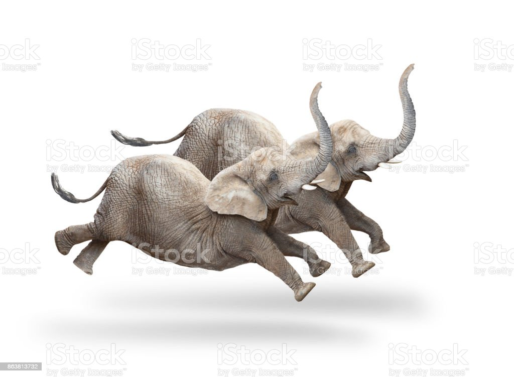 Two African elephants running and jumping. stock photo