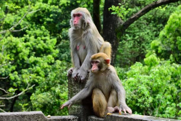 Zwei wachsame Affen – Foto