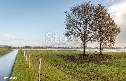 istock Two almost leafless trees in an autumnal landscape 1197105559