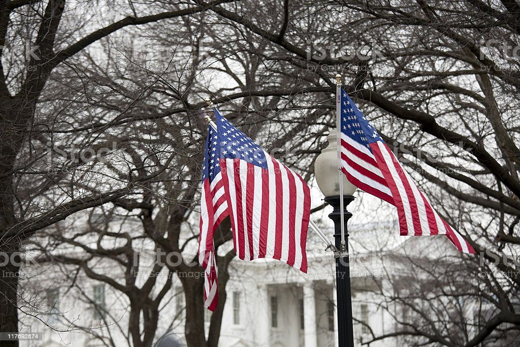 Two American flags against a dry trees stock photo