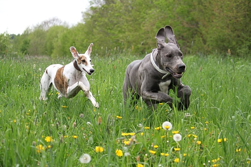 two animal friends running in the park